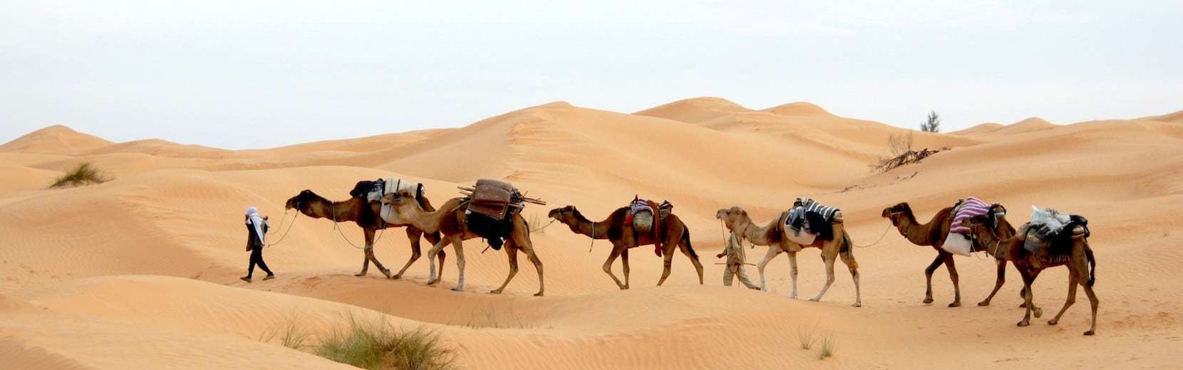 Ride a camel in the Sahara