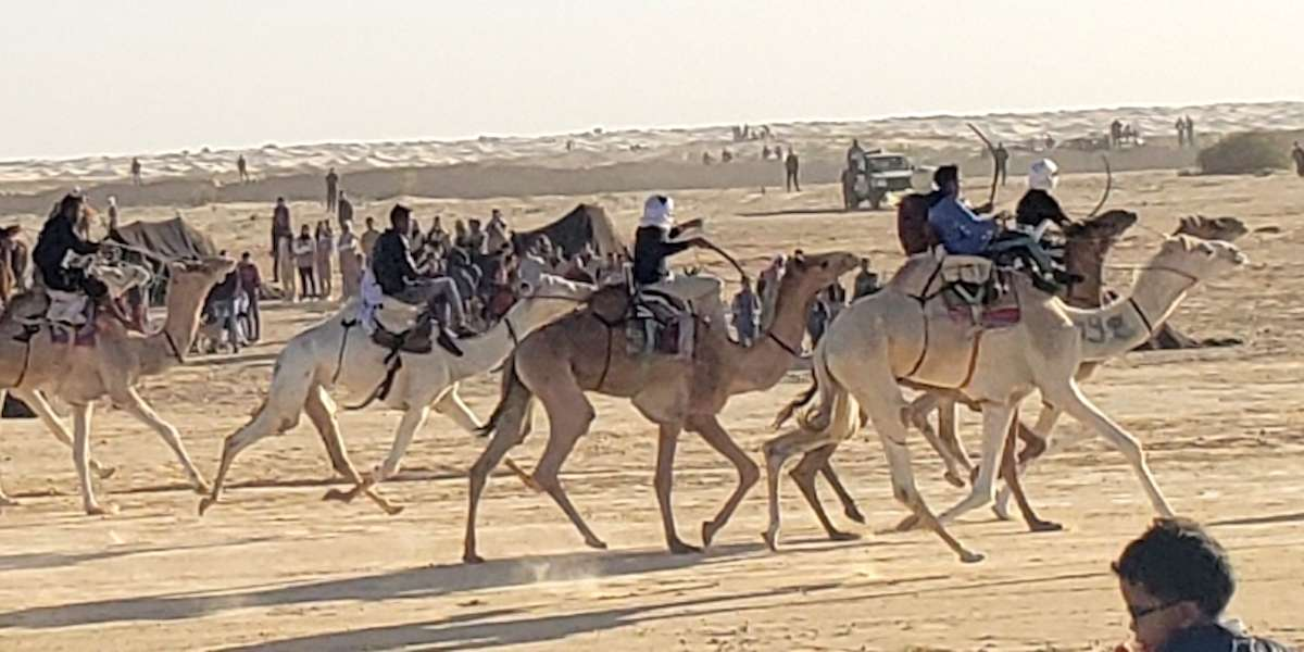 camel racers at festival