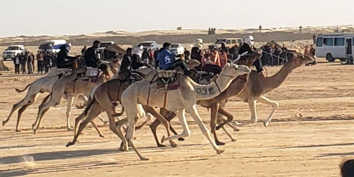 camel racers